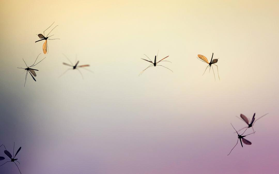 Wat helpt tegen muggen?