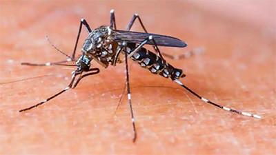 dengue knokkelkoorts infectieziekte