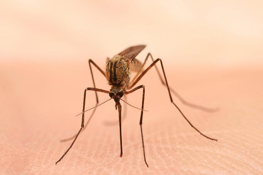 Aandacht voor Wereld Malariadag 25 april