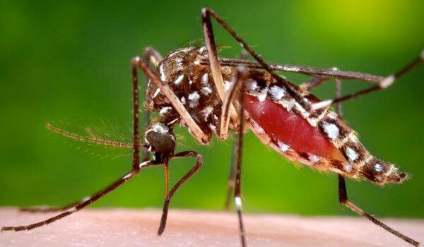 DEET deters mosquitoes in three ways