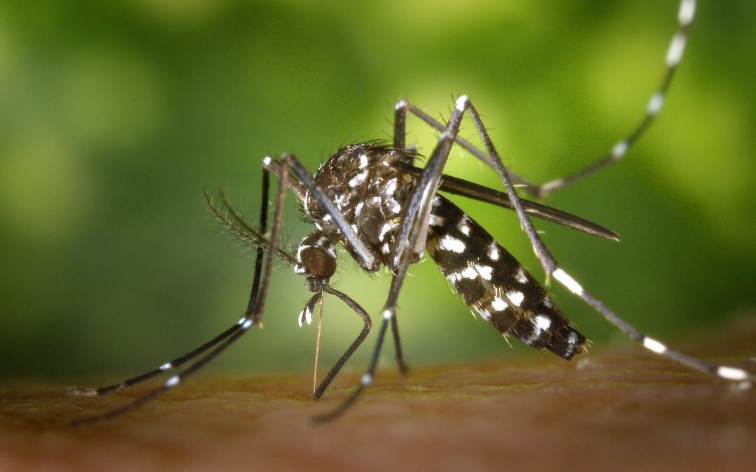 DEET schrikt muggen op drie manieren af